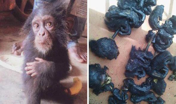 Mafia traficului de animale și delicatesele barbare – Carnea de cimpanzeu