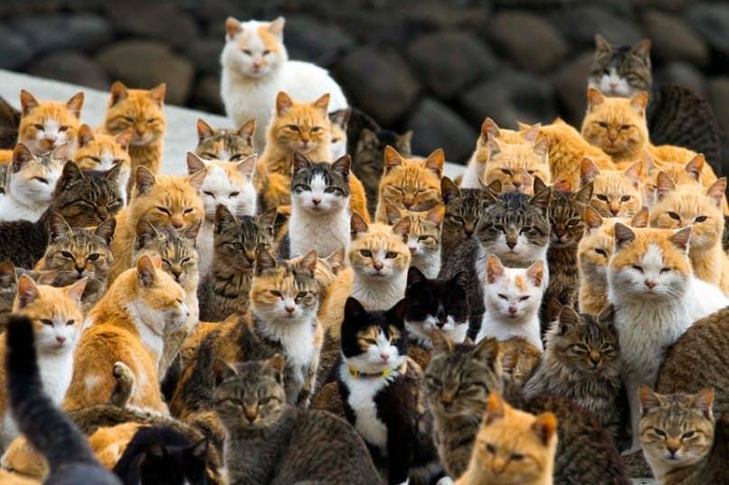 Insulă din Japonia guvernată de pisici – VIDEO