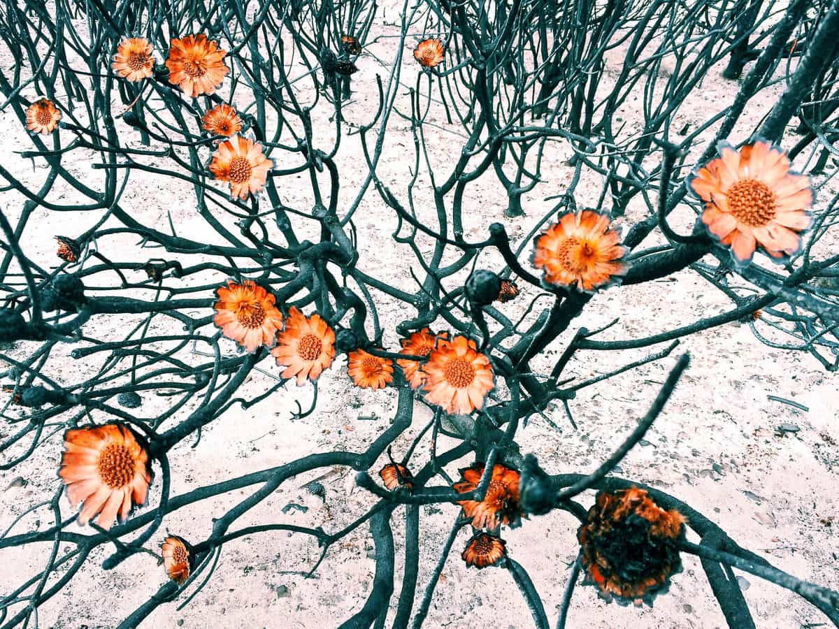 Amy Paterson, Flowers, locul I
